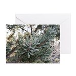 Frosted Pine Holiday Greeting Cards (Pk of 20)