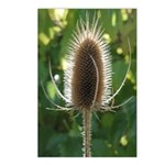 Teasel Postcards (Package of 8)