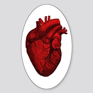 Vintage Anatomical Human Heart Oval Sticker