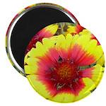 "Gaillardia Flowers 2.25"" Magnet (10 pack)"