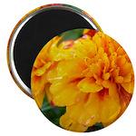 "Orange Flowers 2.25"" Magnet (10 pack)"