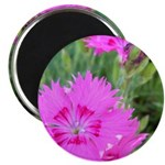 "Purple Flower Blossom 2.25"" Magnet (10 pack)"