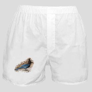 Steller's Jay Boxer Shorts