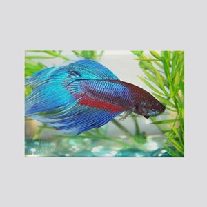 Betta Fish Magnets