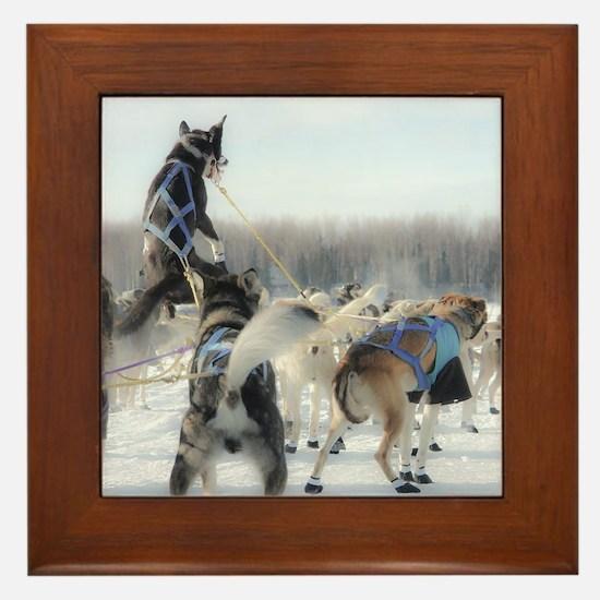 Cute Huskies Framed Tile