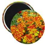 "Red and Yellow Flowers 2.25"" Magnet (10 pack)"