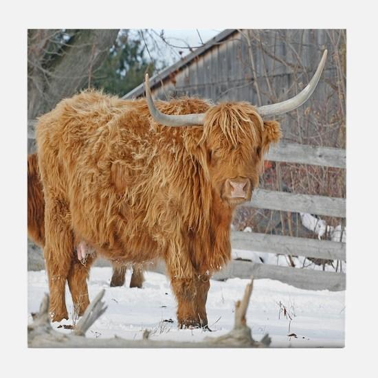 Highland Cattle Tile Coaster