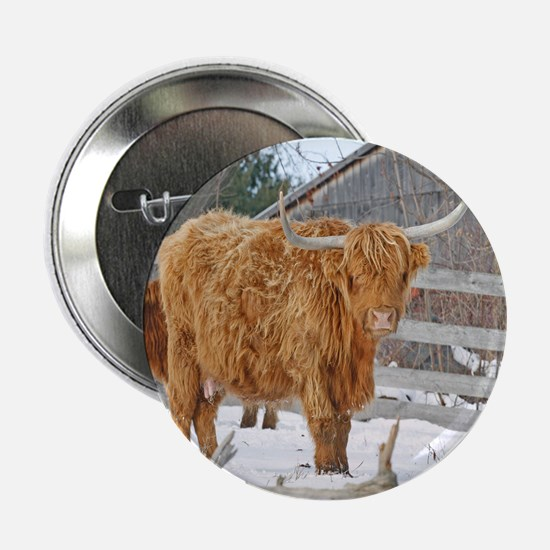 "Highland Cattle 2.25"" Button"