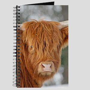 Highland Heifer Journal
