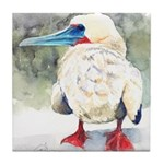 Red-footed Booby Tile Coaster
