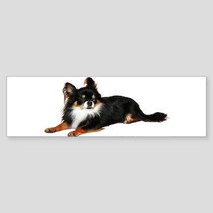 Chihuahua (photo) Bumper Sticker