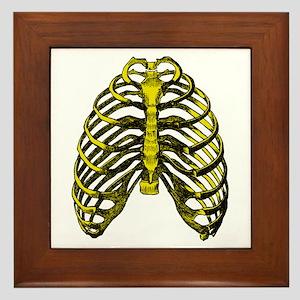 Human Anatomy Rib Cage Framed Tile