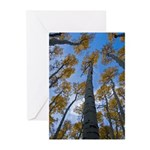 5x7 Note Cards (Pk of 10) Looking Up Aspens