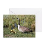 Canada Geese Greeting Cards (Pk of 20)