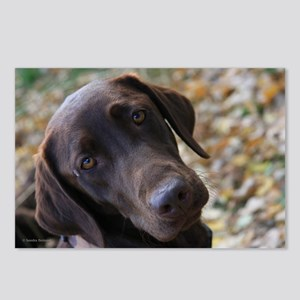 Chocolate Lab C Postcards (Package of 8)
