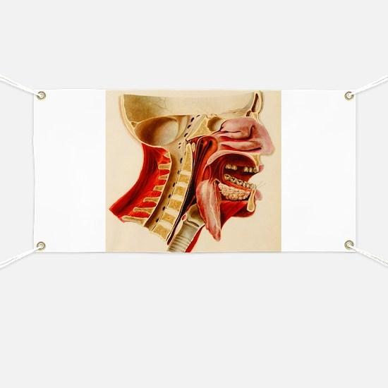 Vintage Anatomy Diagram Banner