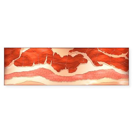 Bacon Bumper Sticker