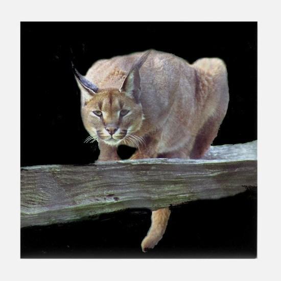 Caracal Cat Crouching Tile Coaster