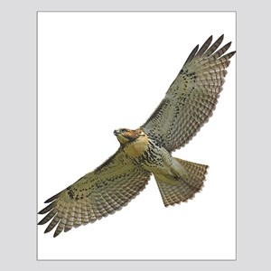 Soaring Red-tail Hawk Small Poster