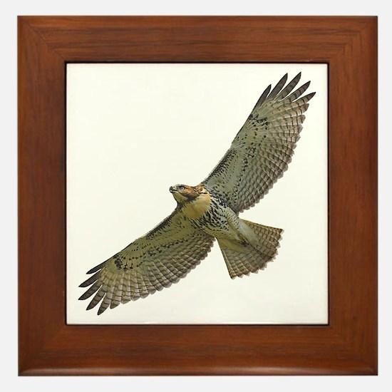Soaring Red-tail Hawk Framed Tile