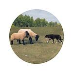Dog Meets Sheep 3.5