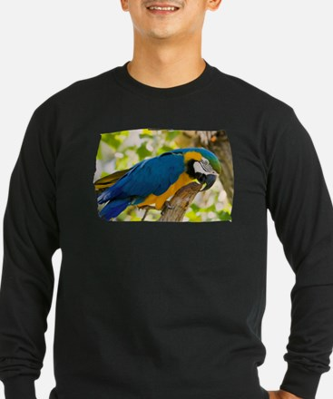 Blue & Gold Macaw T