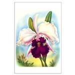 Gorgeous Orchid Vintage Painting Print Poster