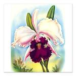 Gorgeous Orchid Vintage Painting Print Square Car