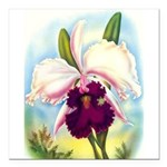 Gorgeous Orchid Vintage Painting Print Square Car