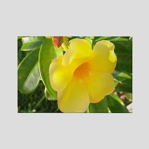 Yellow Mandevilla Rectangle Magnet