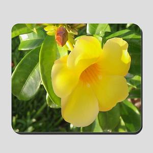 Yellow Mandevilla Mousepad