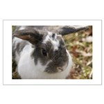 Bunny Rabbit Lop Large Poster
