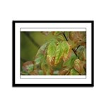 Fall Leaf Color Framed Panel Print