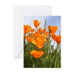 Orange California Poppies Greeting Cards (Pk of 20
