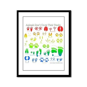 Rainbow 3D Animal Tracks Framed Panel Print