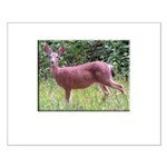 Doe in Grass Small Poster