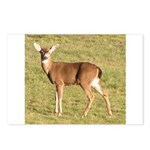Forked Horn Buck Postcards (Package of 8)