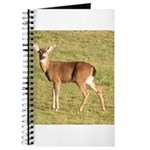 Forked Horn Buck Journal