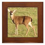 Forked Horn Buck Framed Tile