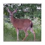 Doe in the Shade Tile Coaster
