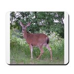 Doe in the Shade Mousepad