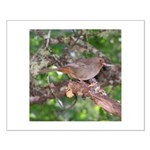 Towhee Small Poster