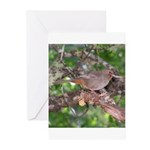 Towhee Greeting Cards (Pk of 20)