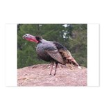 Tom Turkey Postcards (Package of 8)