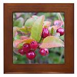 Huckleberries Framed Tile