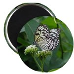 """White Butterfly #4 - 2.25"""" Magnet (10 pack)"""