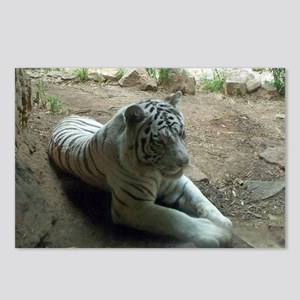 white tiger 9 Postcards (Package of 8)