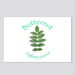 Butternut Postcards (Package of 8)