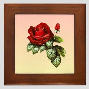 the reddesst rose Framed Tile