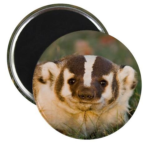 """Badger 2.25"""" Magnet (10 pack)"""